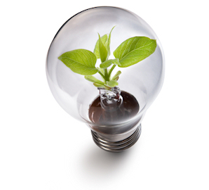 Light bulb with plant growing inside